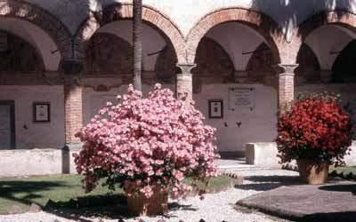 L'azalea, simbolo di Borgo a Mozzano